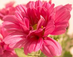 Virágfutár
